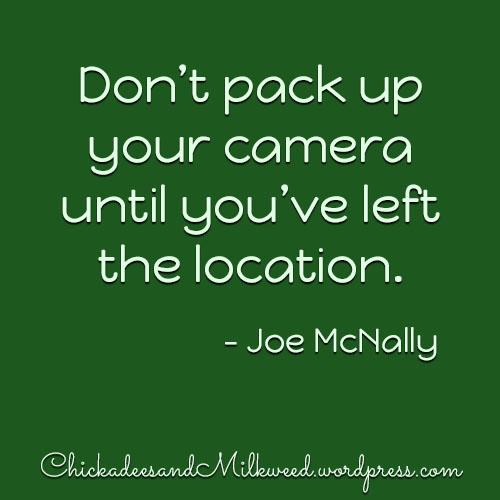 JoeMcNally