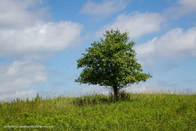 Summer-Tree-Field-Country