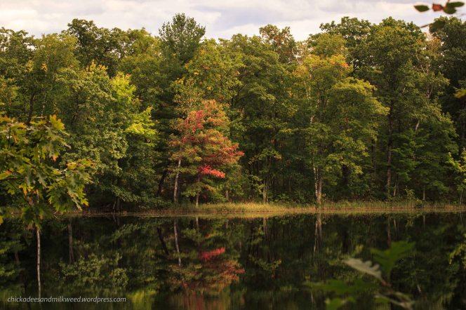 wisconsin-forest-autumn-begins